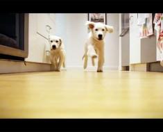 Grabaron a estos cachorros corriendo para ir a cenar en el transcurso de 9 Meses. El resultado es ÉPICO