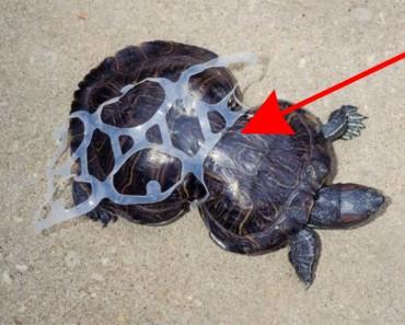 La imagen de esta tortuga dio la vuelta al mundo hace 20 años. ¿Sabes por qué?