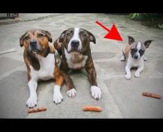 Estos perros esperan pacientemente a sus dulces. Pero espera a VER lo que hace el perro más pequeño