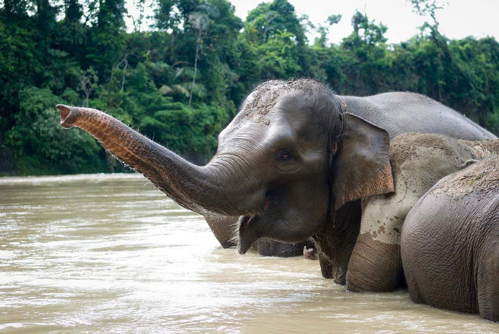 Estos 10 animales pueden extinguirse durante nuestra vida