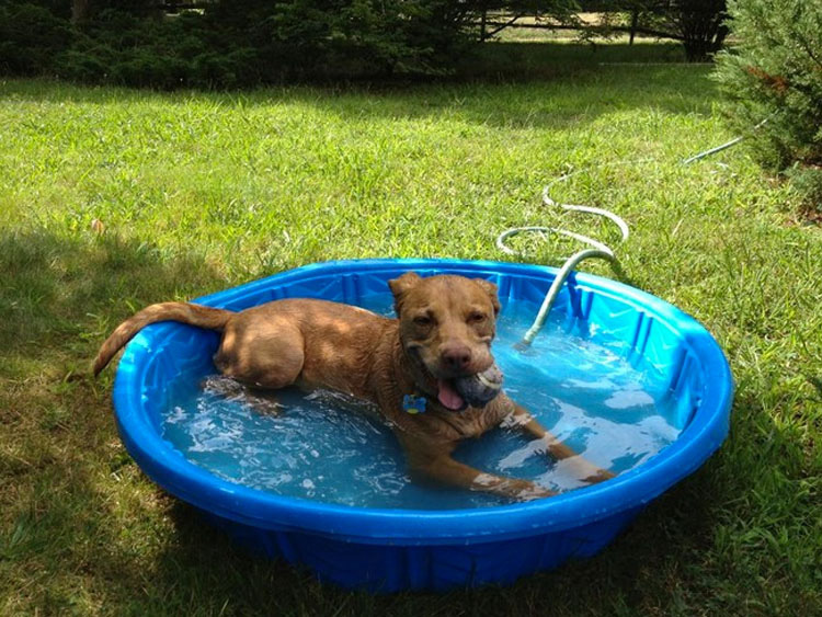 32 Animales aprovechando al máximo sus días de verano resfrescándose en la piscina