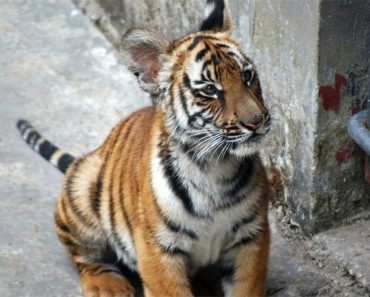 Estos 10 animales pueden extinguirse durante nuestras vidas