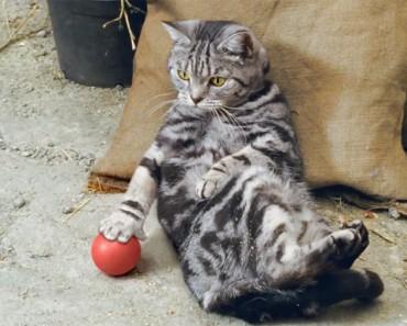 Mantenía mis ojos puestos en lo que el gato tiene en su pata... ¡A los 30 segundos me estaba RIENDO!