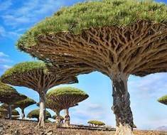 22 árboles impresionantes que no tenía ni idea que existían. No puedo creer que sean reales, especialmente el #7