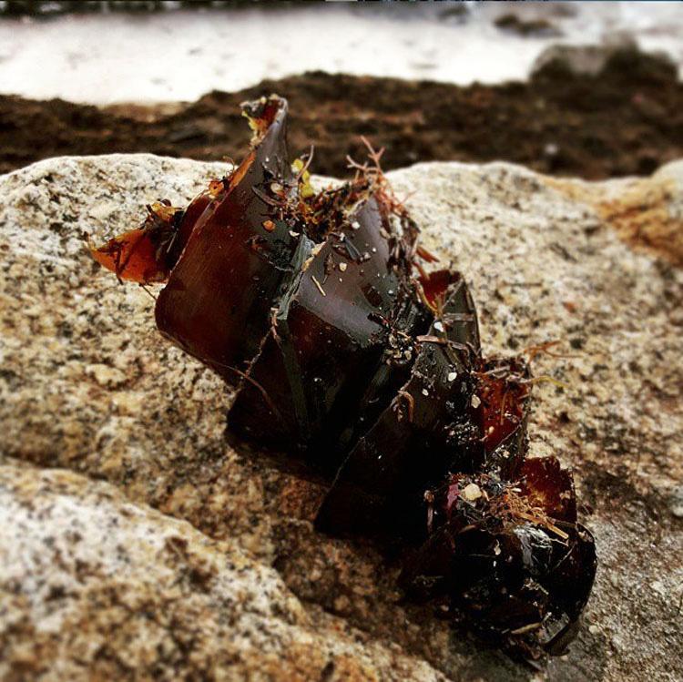 Transeúntes ven un objeto extraño varado en la playa - ¡No vas a creer lo que es!