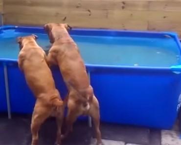 Los perros ven ESTO en el fondo de la piscina. Ahora mira lo que hace el de la derecha...