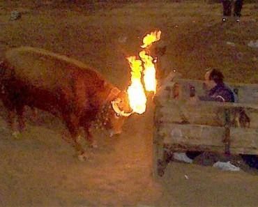 Esta 'Fiesta' es tan cruel que ni siquiera parece real. ADVERTENCIA: imágenes gráficas