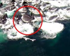 Me quedé SORPRENDIDO al ver lo que este drone filmaba mientras volaba sobre las aguas de Alaska