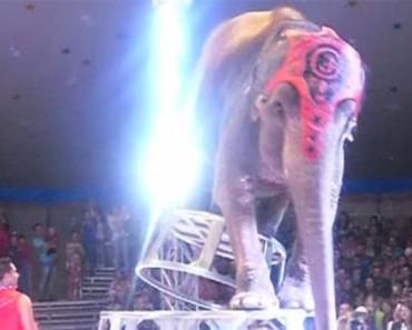 Elefantes de un circo hacen esto por su amigo que SE CAE durante el cruel show 1