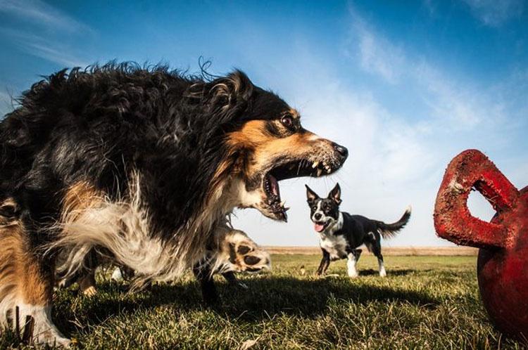 15 fotos de perros tomadas en el momento justo que hacen que parezcan GIGANTES