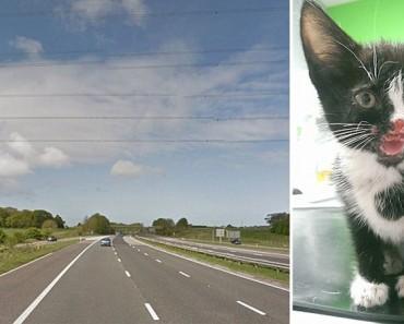 Un conductor de camión ve como este gatito es ARROJADO por la ventana de un coche y trata de rescatarlo
