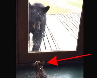 Este oso pensaba que podría entrar a una casa, hasta que se llevó una SORPRESA ENORME