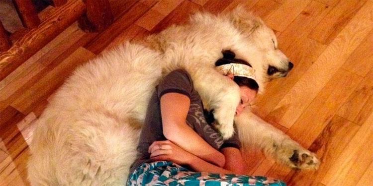 Las mascotas son como superhéroes para las personas con ansiedad