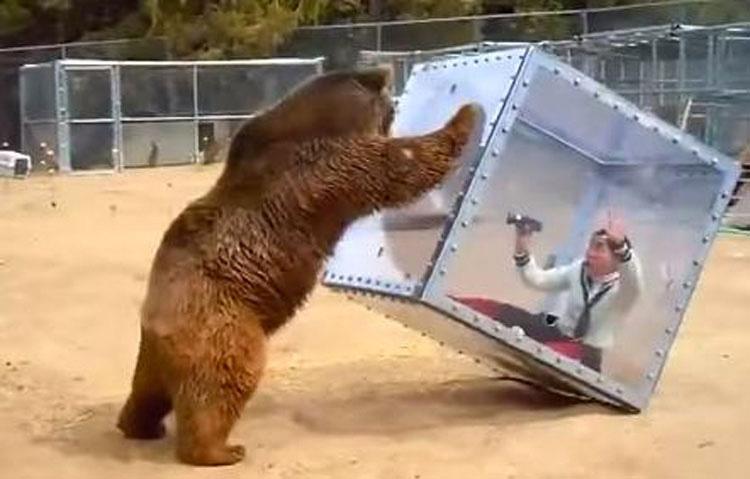 Este oso no quiere formar parte en la filmación de un Reality Show y HACE ESTO