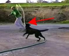 Perro con manguera se da cuenta de que tiene todo el poder ahora y SUCEDE esto. ¡Hilarante!
