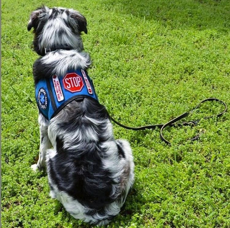 Un extraño no escuchó cuando le dijo que NO tocara a su perro de asistencia. ¿Minutos más tarde? ¡Impactante!