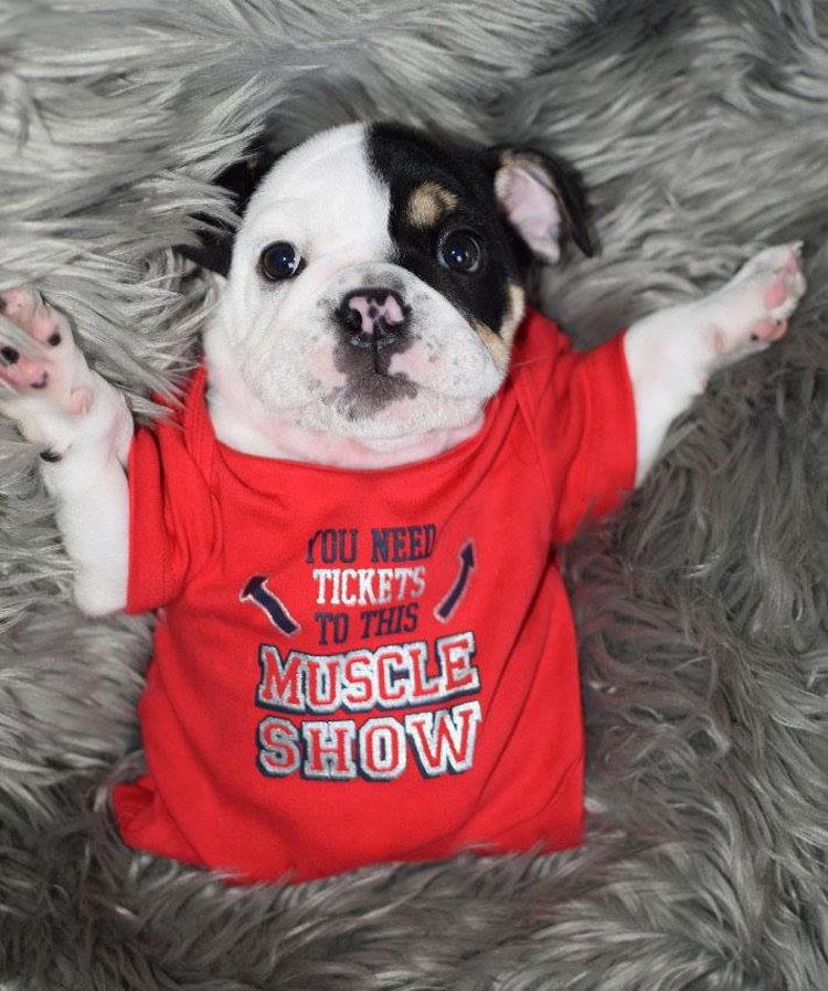 Este cachorrito nació con sólo medio cuerpo. Lo que un Centro de Rescate hizo TE EMOCIONARÁ