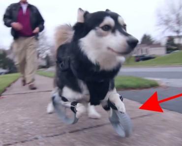 Este perro corre por PRIMERA VEZ en su vida, gracias a unas prótesis impresas en 3D