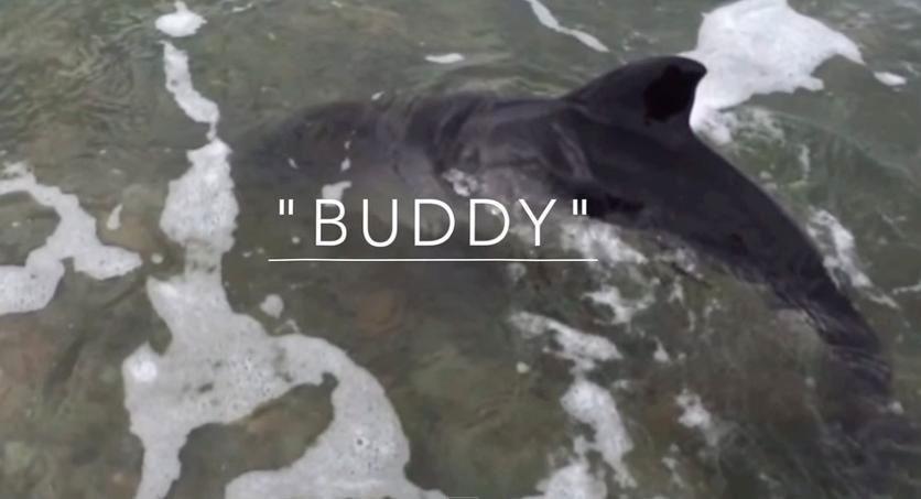 Este perro sintió que este bebé delfín estaba en apuros y SALVÓ su vida