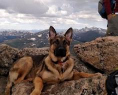 La TRAGEDIA llegó desde el cielo: este perro murió salvando la vida de su dueño de un rayo