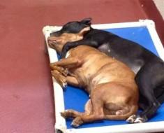 Estos dos perros abandonados encontraron el compañerismo. Su foto se ha hecho VIRAL por su EMOTIVIDAD