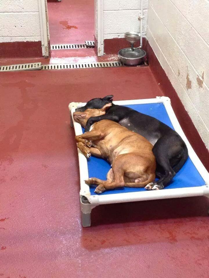 Estos dos perros abandonados encontraron el compañerismo. Su foto se ha hecho VIRAL por su EMOTIVIDAD 1
