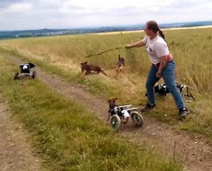 Estos perros tienen terribles discapacidades. Pero parecen NO saberlo. ¡Y es tan HERMOSO!