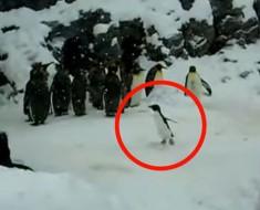 Este pequeño pingüino está teniendo el MOMENTO de su vida y tú necesitas verlo