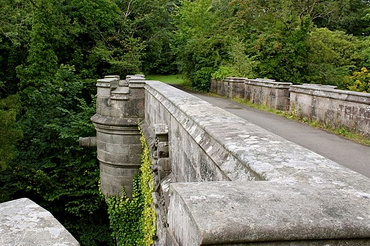 Este puente hace que los perros quieran hacer algo INQUIETANTE