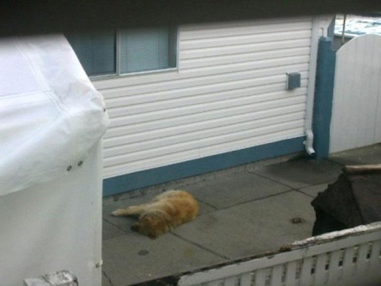 Los vecinos miraron por encima de la valla y se HORRORIZARON, así que se tomaron la ley con sus propias manos