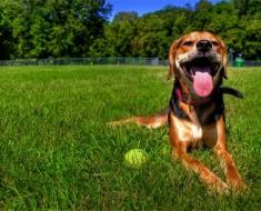 sobrecalentamiento-perro-4