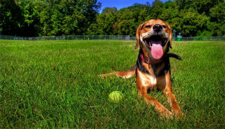 IMPORTANTE si tienes perro. Cómo saber si tu perro tiene SOBRECALENTAMIENTO