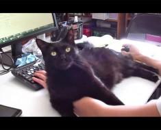 Era difícil concentrarse en el trabajo con los gatos cerca, por lo que se le ocurrió una solución de GENIO