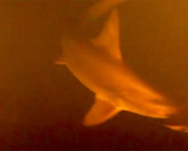 EXCLUSIVA: se encuentran tiburones dentro de un volcán activo... VIVOS