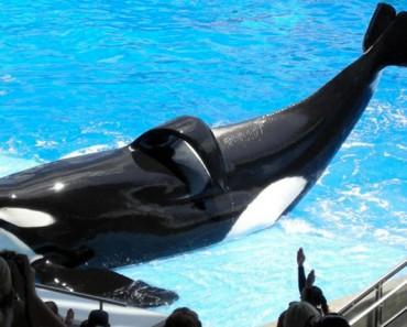 Estimado visitante de SeaWorld (u otros parques marinos): le están MINTIENDO