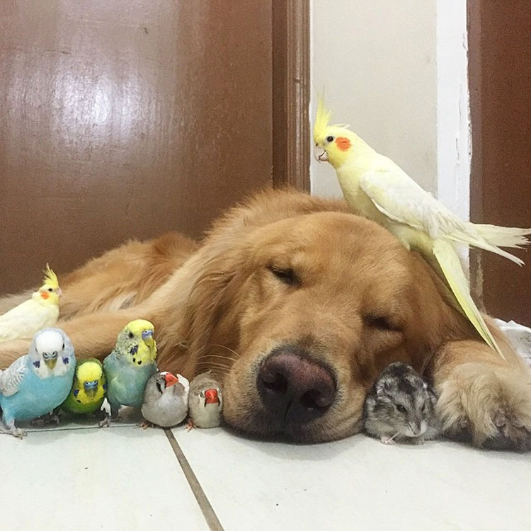 Este perro tiene una banda bastante inusual de amigos. ¡Son tan lindos juntos!