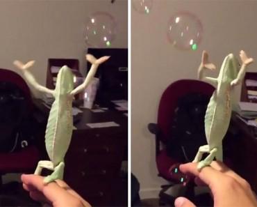 Este camaleón se ha hecho VIRAL por su emoción explotando pompas de jabón