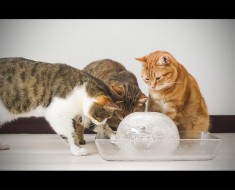 Estos gatitos descubren una pelota gigante de hielo, lo siguiente que hacen DERRETIRÁ su corazón