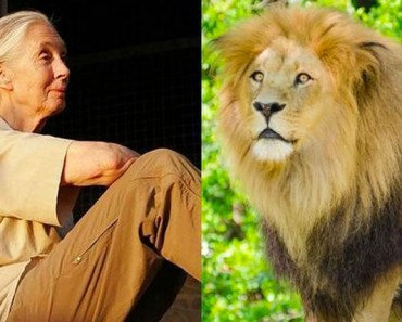 En la oscuridad de la muerte de Cecil, Jane Goodall ve la luz