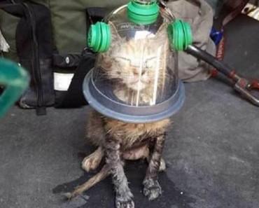 Los bomberos encontraron a este gatito al borde de la muerte. Afortunadamente iban preparados con ESTO...