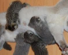 Estas mamás están definitivamente ABRUMADAS con la crianza de sus pequeños. ¡Mira la #14!