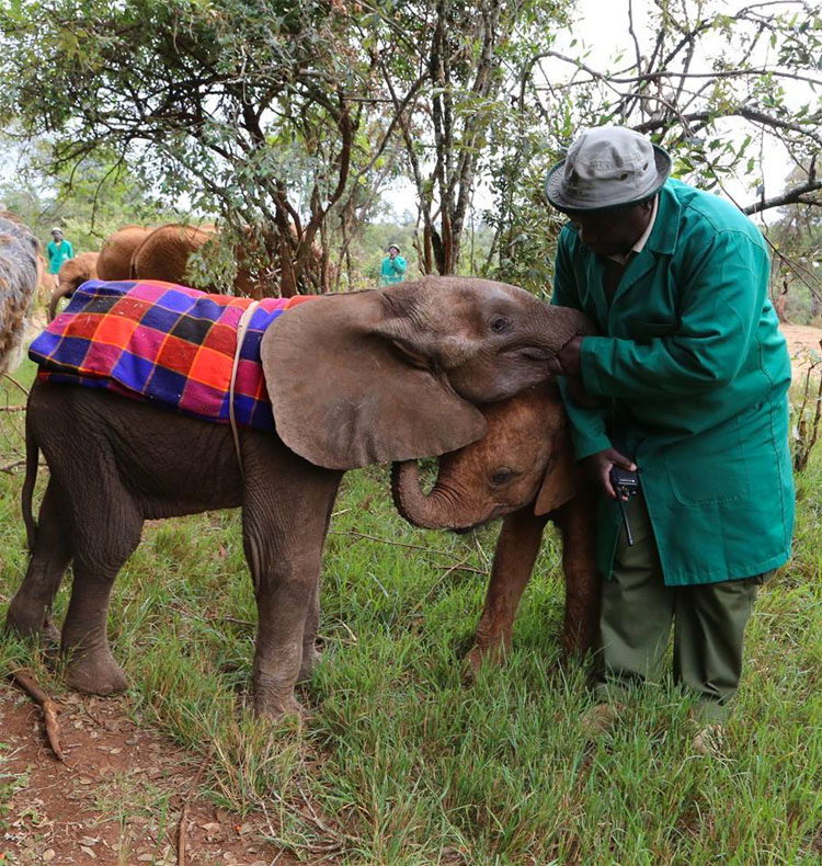 Estos cinco elefantes de una misma familia fueron MATADOS en solo noche por cazadores furtivos