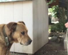 Este perro pasó su vida solo y abandonado... hasta que una persona mostró su amor
