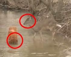 Un ciervo tropezó accidentalmente con un perro... ¡Lo que sucedió después es totalmente inesperado!