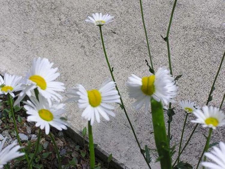 Lo que estas personas cerca de Fukushima encuentran creciendo en su jardín es ATERRADOR