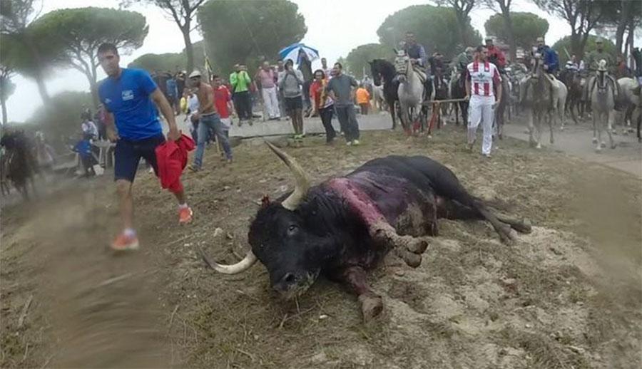 Esta es la TERRIBLE historia de la última víctima de un cruel espectáculo. ¡No tengo palabras!