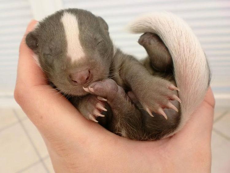 20 Animales que nunca has visto de bebés