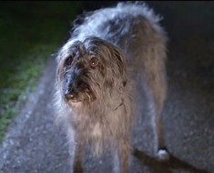 Este perro escapa de su abusivo propietario, y luego espera a las puertas de un desconocido...