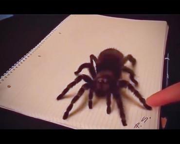 Esta araña tiene un aspecto ATERRADOR. Pero cuando la tocan no me esperaba ESTO