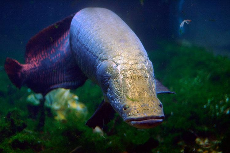 Iba de pesca por el Amazonas - Y lo que encontró fue un MONSTRUO gigante